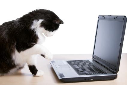 Deze poes probeert via de laptop contact met ons op te nemen.