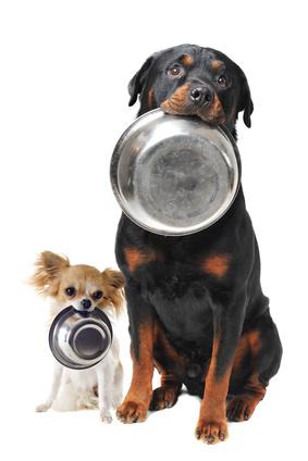 Dagelijks goede voeding is essentieel voor een gezond gewicht.