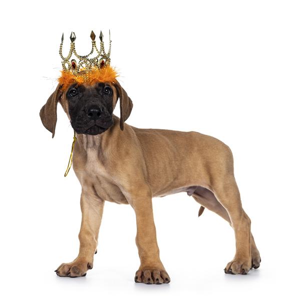 Een Nederlandse pup