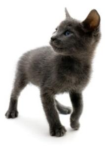Bij een kitten in huis is het belangrijk om aan een aantal zaken te denken.