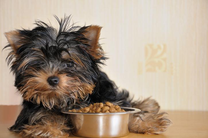 Een goede, aangepaste voeding is belangrijk als je net een pup in huis hebt.