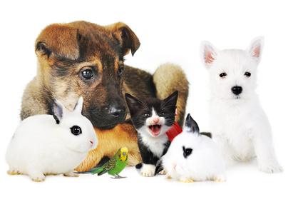 Voor alle diersoorten is een goede ziektepreventie belangrijk.